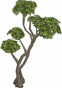 Eucalyptus Tree RuneScape Wiki FANDOM Powered By Wikia