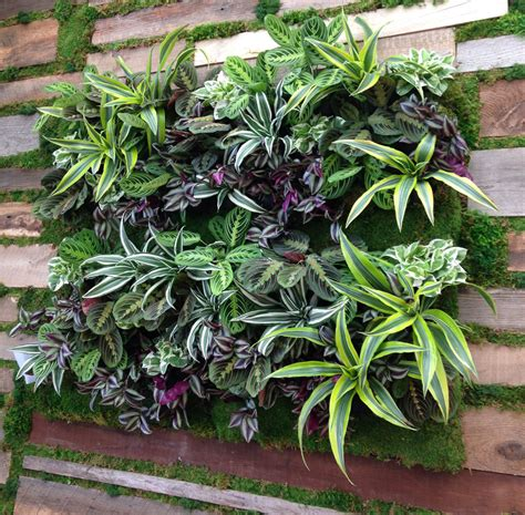 Vertical Garden Solutions by Living Walls Truevert 174 Vertical Garden Solutions San Diego