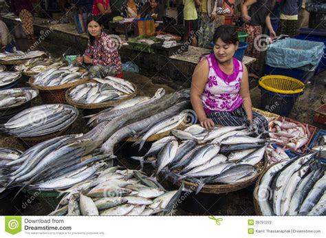 big fish  myanmar burma editorial photography