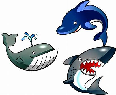 Dolphin Marine Biology Clipart Clip Transparent Cartoon