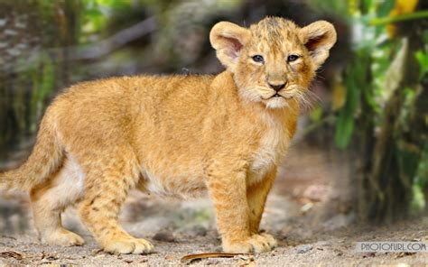 Wild Animals Wallpapers Forest Animals Wallpapers Free