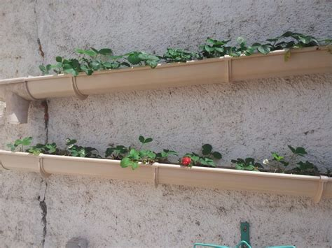 table pliable cuisine fraisiers dans une gouttiere jardi brico