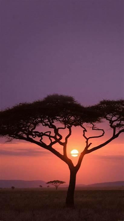 Safari Sunset Solo Iphone Africa Tree