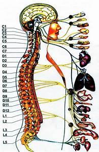 Клизмы от простатита из ромашки зверобоя и шалфея трав