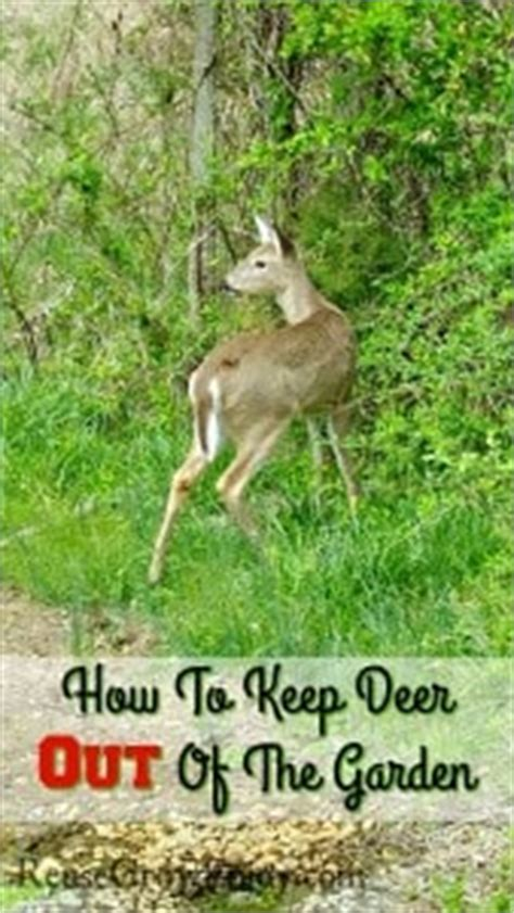 how to keep deer out of your garden farm archives reuse grow enjoy