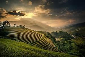 Rice Paddies wallpaper – Francois Gelinas Photographies