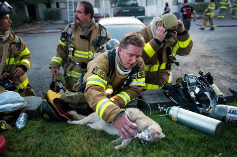 16 Pictures Of Firefighters Rescuing Animals Will