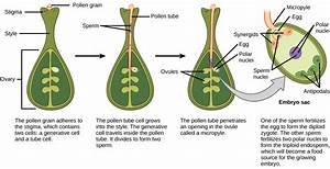 Plant Reproduction   Biology 1520