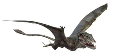 Dinosauro Volante Tous Les Dinosaures Du Jurassic World