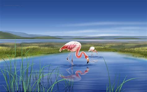 Free Download Beautiful Wallpapers For Desktop Flamingo