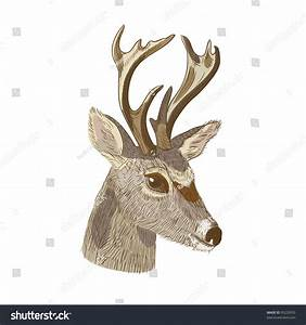 Pen Ink Vector Illustration Deer Head Stock Vector ...