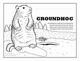 Groundhog Coloring Pages Ground Groundhogs Activities Happy Fun Activity Climb Tree Squirrel Bark Trees sketch template