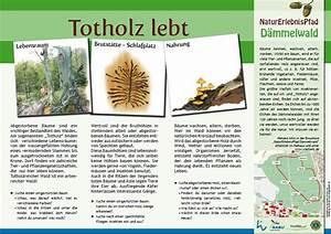 Tiere Im Insektenhotel : stadt wiesloch d mmelwald ~ Whattoseeinmadrid.com Haus und Dekorationen