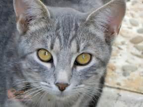 gray cats grey cats catnip
