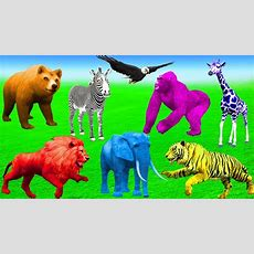 Learn Zoo Wild Animals Names And Sounds In Forest  Learn Colors Animals Cartoons For Children