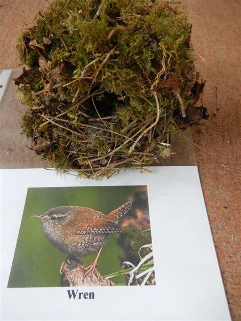 Simon Boyes: Some common British birds' nests