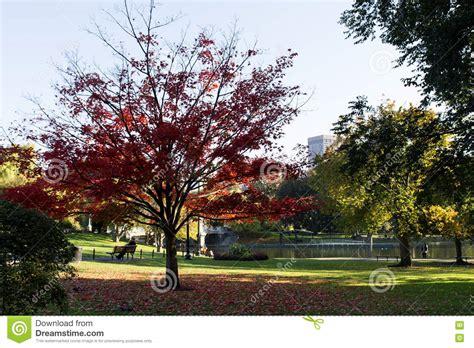 baum mit herzblättern sch 246 ner baum mit roten bl 228 ttern stockbild bild blatt teppich 80039277