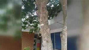 Noose found hanging at North Carolina high school - CBS News
