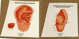 Auricular Therapy Ear Chart Eastern Acupuncture Natural Therapy Buy Auricular Medicine