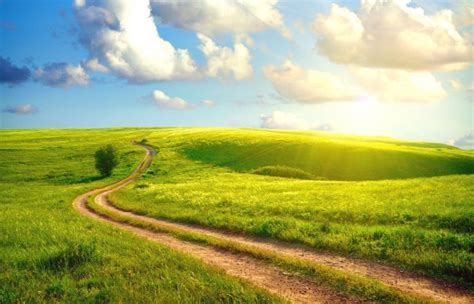 path   meadow beautiful green nature