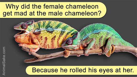 A Stunning List Of Different Species Of Chameleons With