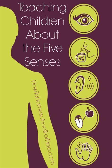five senses unit study resources how to homeschool for 865   FiveSenses