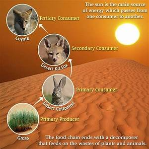 Mojave Desert Food Chain