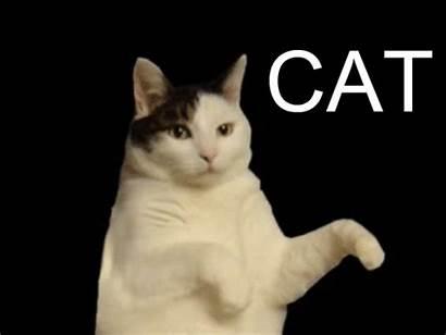 Animated Gifs Lol Dancing Cat Kitty Dance