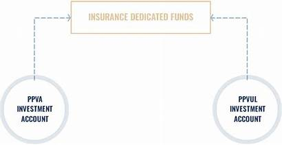 Insurance Dedicated Fund Investment Tax Earnings Deferred