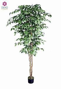 kunstlicher ficus benjamini baum grun weiss 220 cm With garten planen mit bonsai ficus benjamini