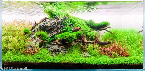 Aquascaping Layouts by The Nature Style Planted Tank Aquascape Awards