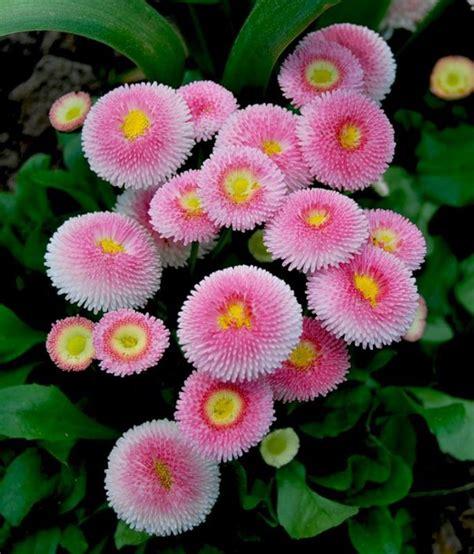 unusual daisies outdoorthemecom