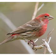 make up classes in nj house finch