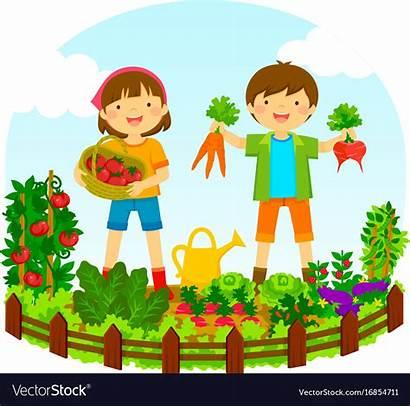 Garden Vegetable Vector Royalty Vectors