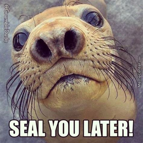 For Seal Meme - seal you later by grumbledude meme center