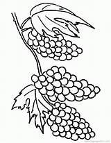 Grapes Coloring Clusters Grape Pages Printable Clipart Drawing Vine Vines Cliparts Clip Popular Draw Cartoon Handwriting Worksheet sketch template