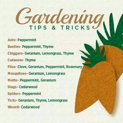 free gardening tips 27 best images about doterra for summer on pinterest gardens orange sorbet and hand scrub