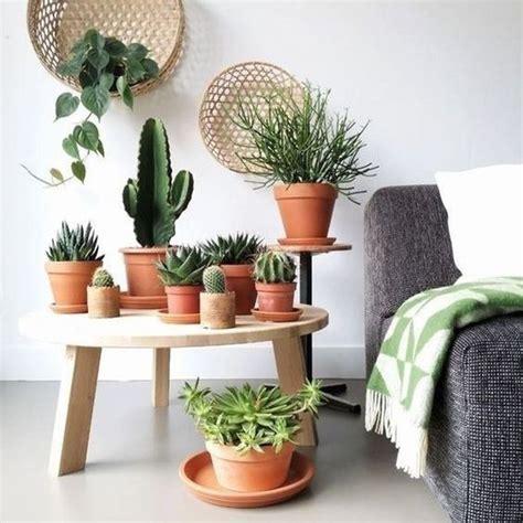 Dekorasi Rumah Dengan Kaktus Mini Yang Tak Biasa Dan Lucu
