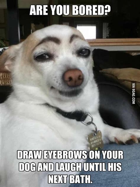 dogs dont  eyebrows gag