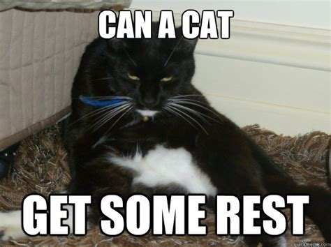 Tired Cat Meme - can a cat get some rest sleepy cat