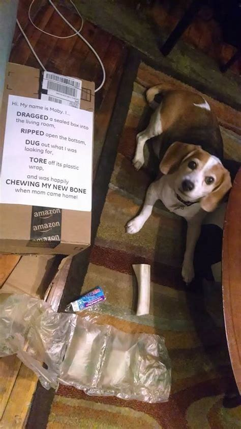 hilarious dogshaming
