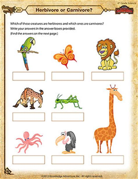 herbivore or carnivore science worksheet for 4th grade