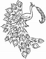 Peacock Coloring Pages Drawing Feathers Outline Printable Peacocks Feather Easy Template Simple Sheets Indian Bird Colouring Colorful Draw Painting Getdrawings sketch template