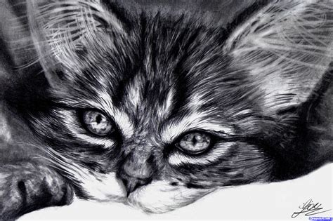 draw  realistic kitten cute cat pictures litle pups