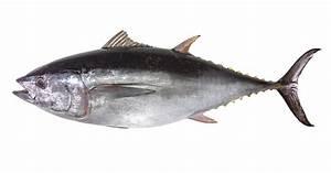 Safest Fish to Eat | Men's Journal