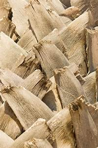 Palm Tree Trunk Texture Free Stock Photo
