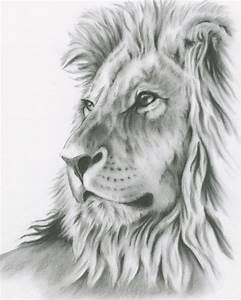Charcoal Drawing 8x10 ORIGINAL Lion Art Lion by ...