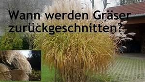 Wann Schneidet Man Gräser : wann werden gr ser zur ckgeschnitten youtube ~ Frokenaadalensverden.com Haus und Dekorationen
