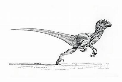 Deinonychus Ostrom Bakker Drawing Velociraptor Jurassic Dinosaur