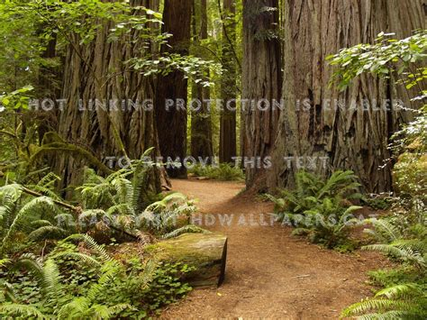 Jedediah Smith Redwoods State Park Green